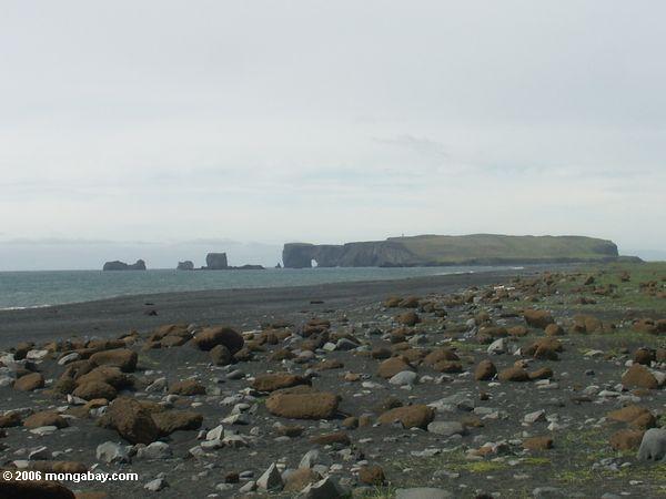 Black sand beach in Iceland  near Vik