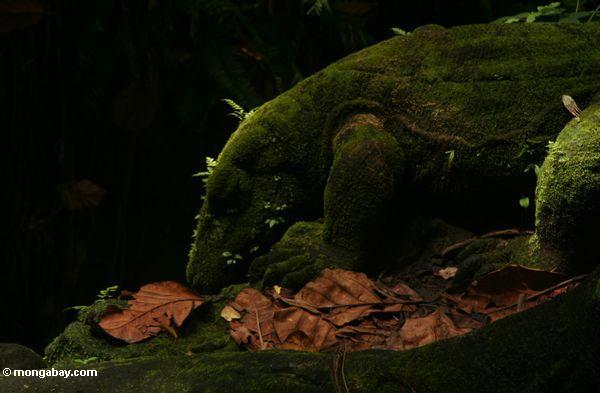 Eidechsestatuen im Affe-Wald Ubud