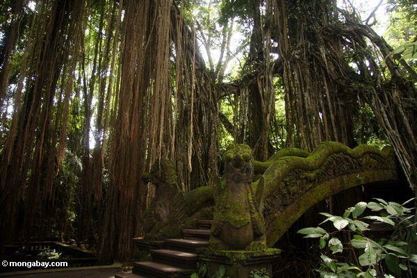 Drachebrücke im Affe-Wald, Ubud