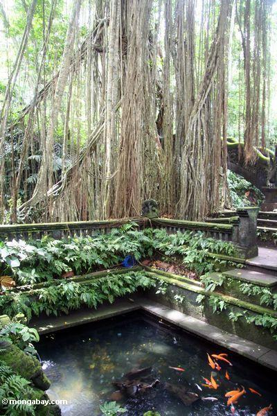 Karpfen im Bügelbrunnen am Affe-Wald