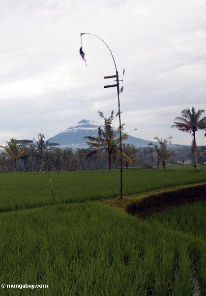 Windmühle unter Reis fängt in Bali mit Einfassung Batur Vulkan im Hintergrund