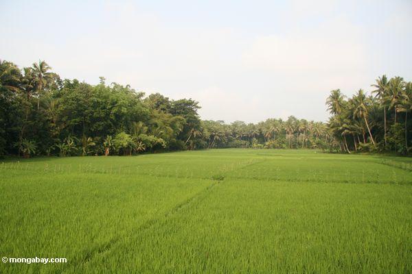 Java Reis fängt