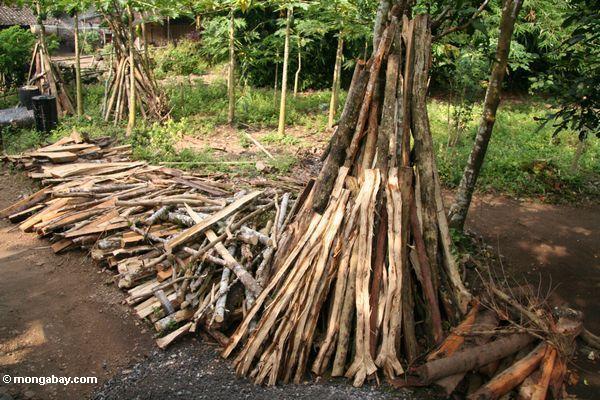 Brennholz schnitt vom lokalen Regenwald