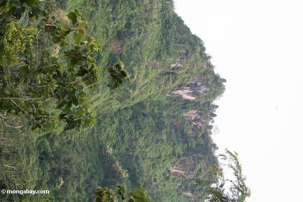 Kalksteinberge bedeckt im Wald