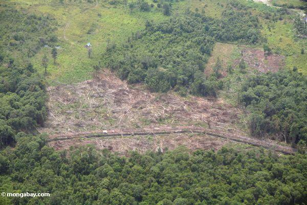 Luftaufnahme des entwaldeten Dschungels in Borneo