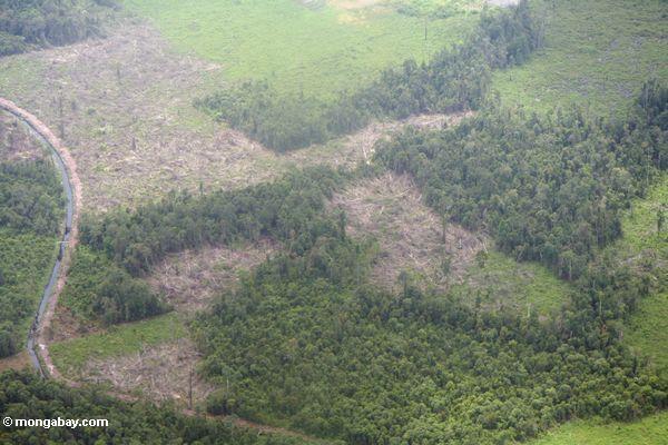 Luftaufnahme von rainforest, das für Landwirtschaft Kalimantan,