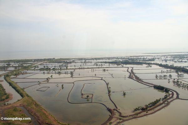 Luftaufnahme der Mangrovewälder, die gewesen sind, löschte für das Bewirtschaften und Aquaculture