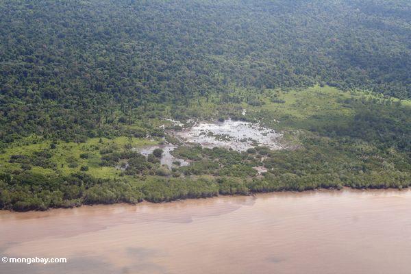Mangrove-Reinigung in Borneo