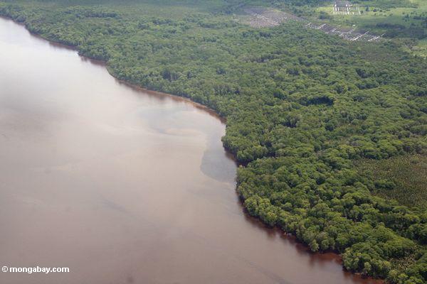 Mangrove-gezeichnete Küste von Südborneo