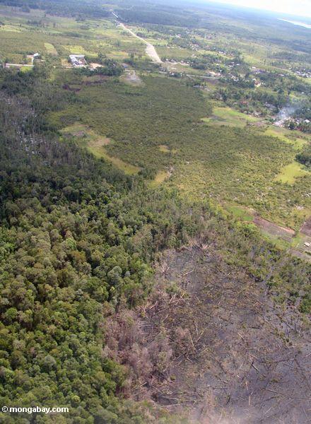 Luftaufnahme des Schrägstrich-und-gebrannten Waldes nahe Pangkalanbun, Kalimantan