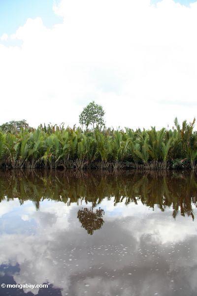 НСДП ладонями по реке seikonyer