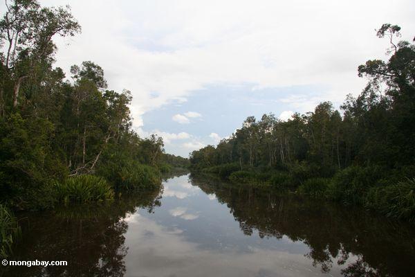 sekonyer река лес