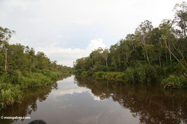 Wald entlang dem Sekonyer Fluß