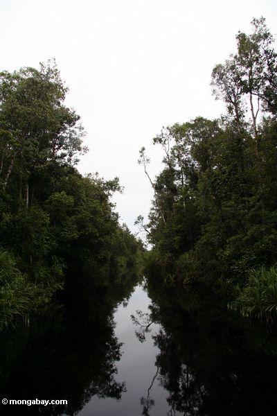 Der blackwater Fluß, zum zu kampieren undichtes Orangutan Mittel
