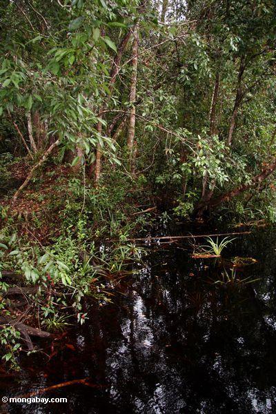 Блэкуотер болото, в Борнео