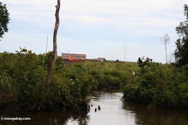 Häuser auf dem entwaldeten Ebene gerechten äußeren Tanjung Puting Nationalpark