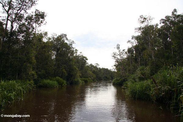 Seikonyer Fluß
