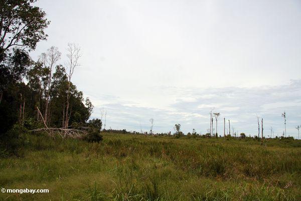 Entwaldeter Bereich auf dem Rand Tanjung Puting Nationalpark