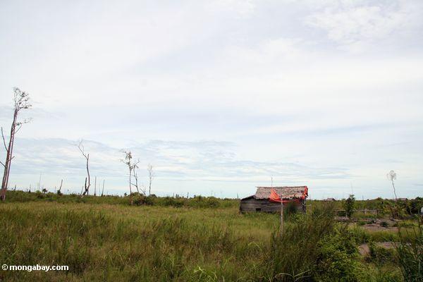 Verlassenes Gehöft auf einem entwaldeten Ebene gerechten äußeren Tanjung Puting Nationalpark