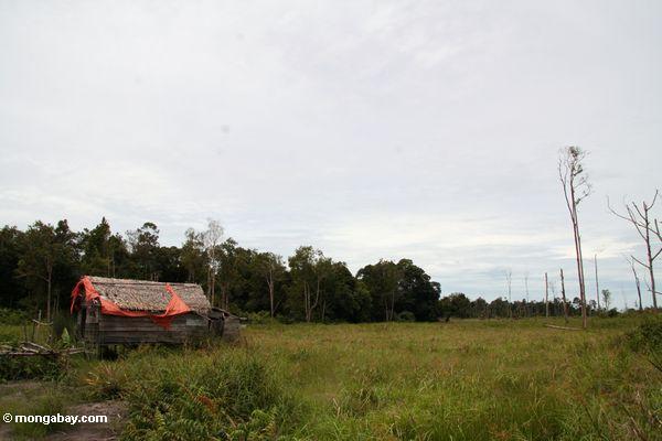 Verlassener Kabine gerechter äußerer Tanjung Puting Nationalpark
