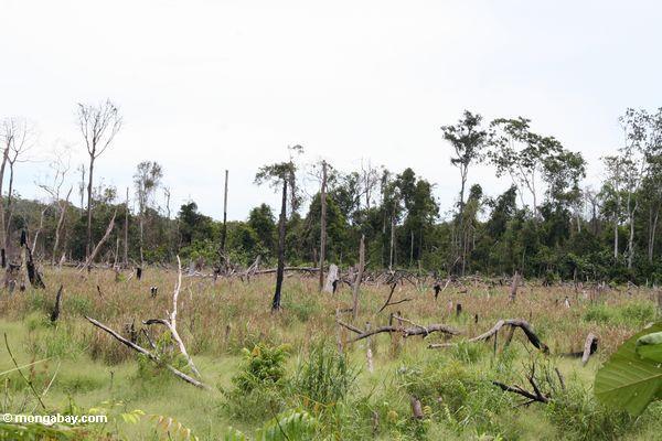 Schrägstrich-und-gebrannter Waldflecken nahe Tanjung Puting Nationalpark