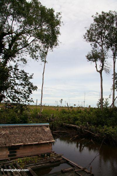 Ausdehnung des gelöschten forestland nahe Tanjung, das Kalimantan