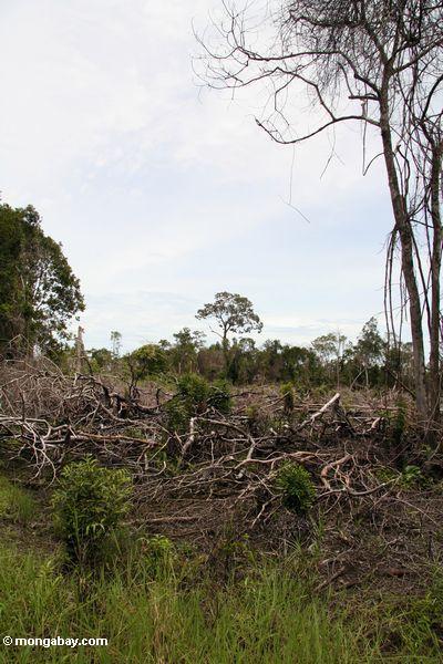 Gelöschter Flecken von rainforest