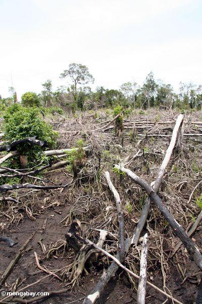 Verkohlter tropischer Wald bleibt von Schrägstrich-und-brennen Landwirtschaft