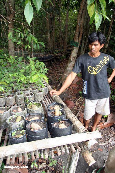 Dorfbewohner beschäftigt als Erhaltung Arbeiter an einem Aufforstungprojekt Tanjung Puting im Nationalpark
