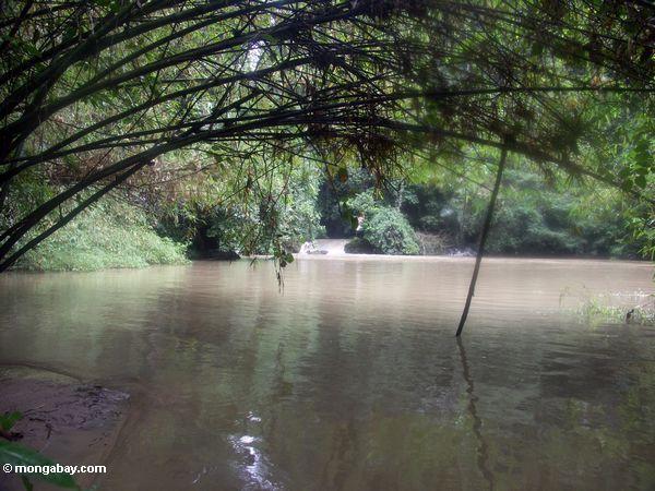 Bantimurung Fluß