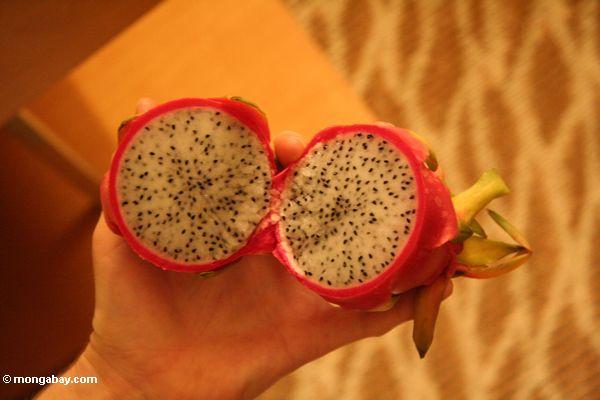 Drache-Frucht - Hylocereus undatus