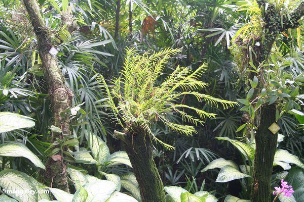 Plants (Singapore Botanical Gardens)