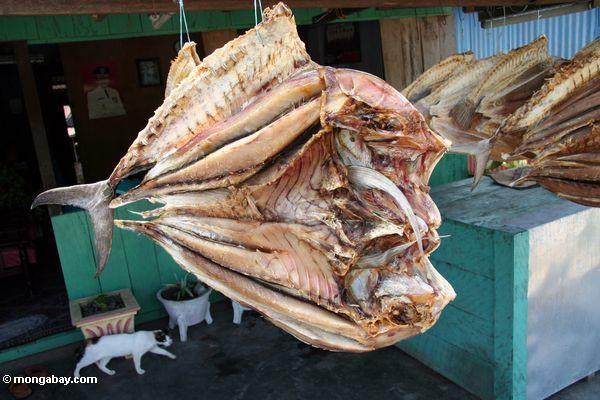 Getrocknete Fische spalteten sich in halbem