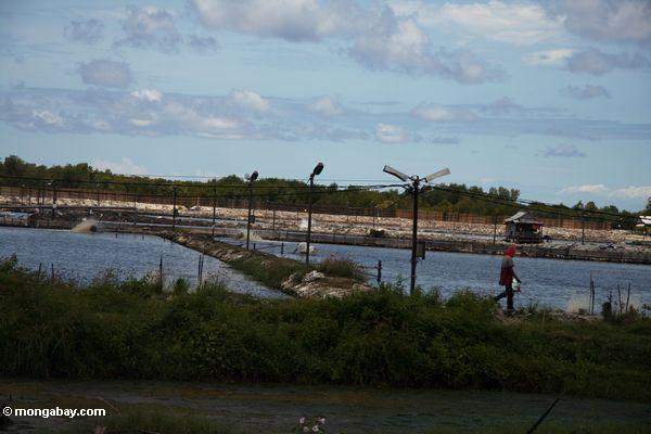 Garnelebauernhöfe in Sulawesi