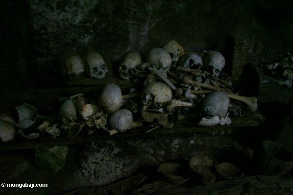 человеческих останков в пещере на Londa nanggala