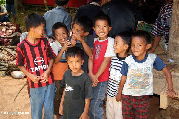 Zicklein am Begräbnis in Toraja landen