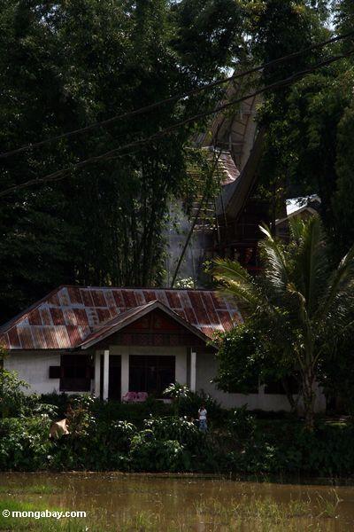 Modernes Toraja Haupt
