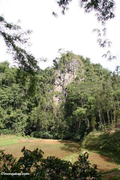 Entfernte Ansicht der Klippe Gräber Londa Nanggala