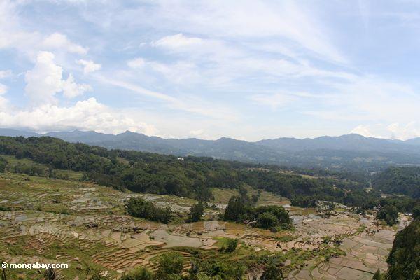 Tiered Reispaddys von Batutomonga