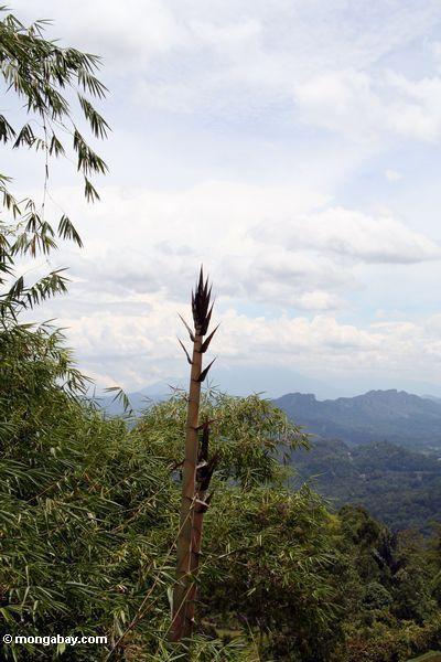 бамбук стрелять