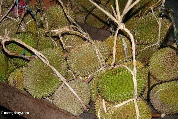 Durianfrucht im Markt