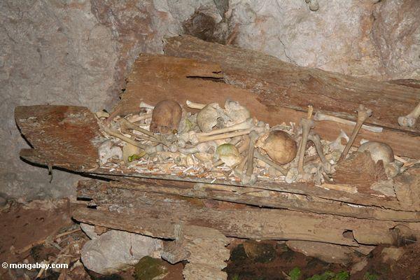 Alte menschliche Knochen in einem hölzernen Sarg