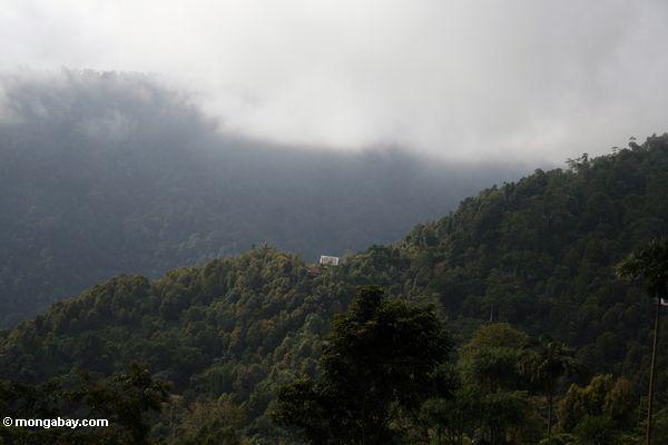 Berg Haupt in den Wäldern von Sulawesi