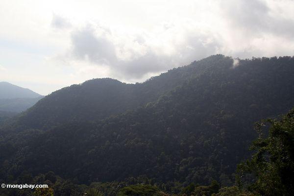 Bewaldete Kante