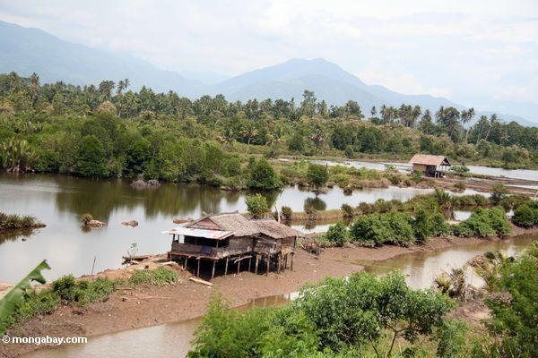 Mangrovesumpf wandelte für Regelung und Landwirtschaft