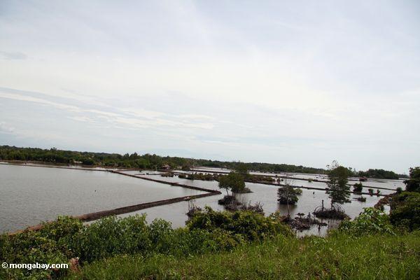 Mangroven löschten für Regelung und Landwirtschaft