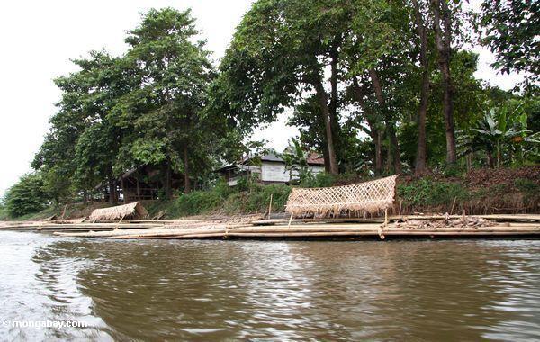 Bambusboote auf dem Fluß, der abläßt See Tempe