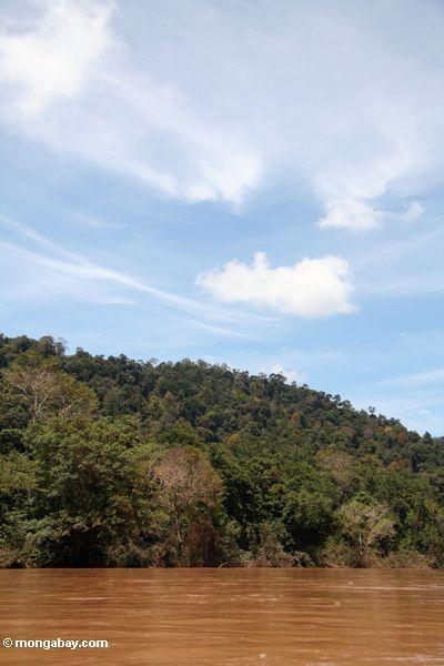 Jungle along the Tembeling River (Taman Negara National Park in Malaysia)