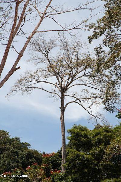 масла пальмовых плантаций посягательства на родных лесов в Малайзии