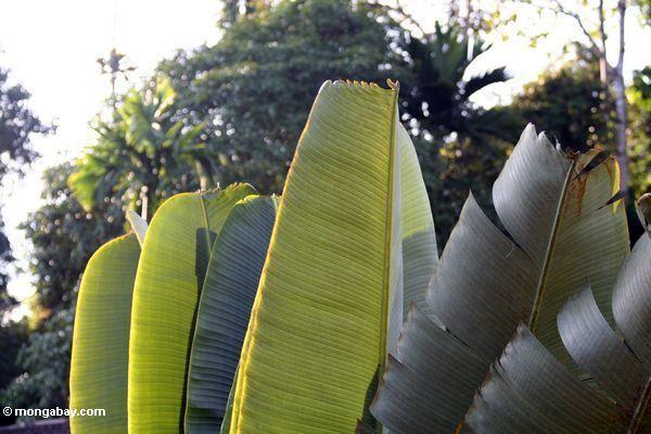 Palme verläßt Sonnenuntergang